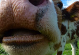 Dairy sundries